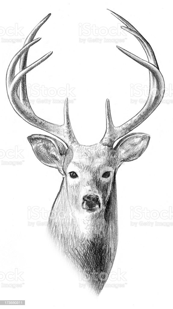 Reindeer Face Line Drawing : Deer sketch stock photo more pictures of animal istock