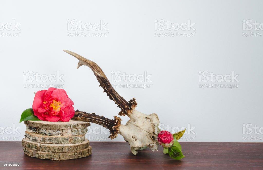 Fotografía de Cráneo De Venado Para Decoración Con Camelias En ...