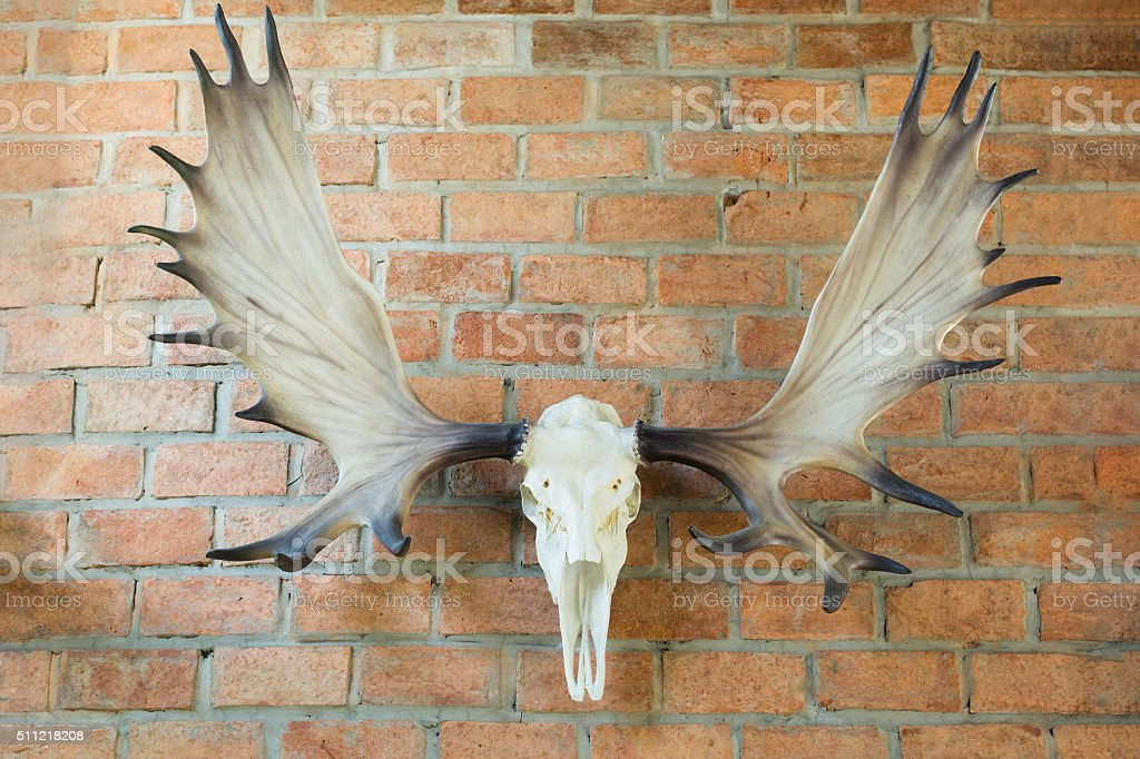 Deer skull hanged stock photo