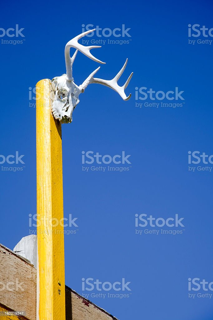 Deer Skull on a Post royalty-free stock photo