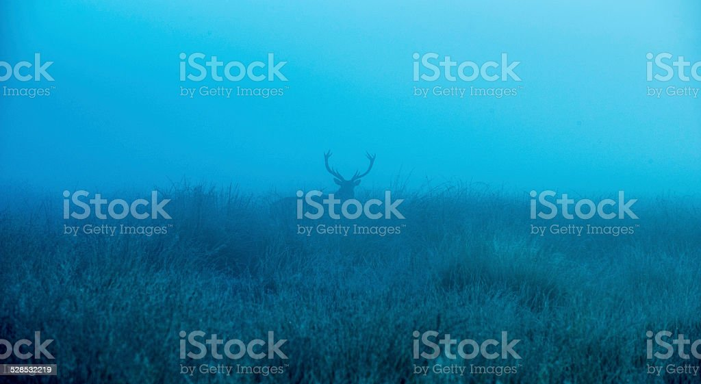 Deer stag silhouette! stock photo