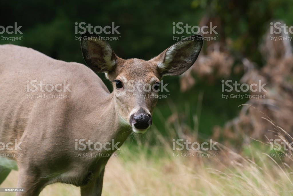 Deer Standing in Forest stock photo