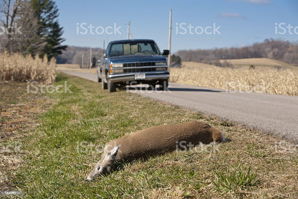 deer strike stock photo