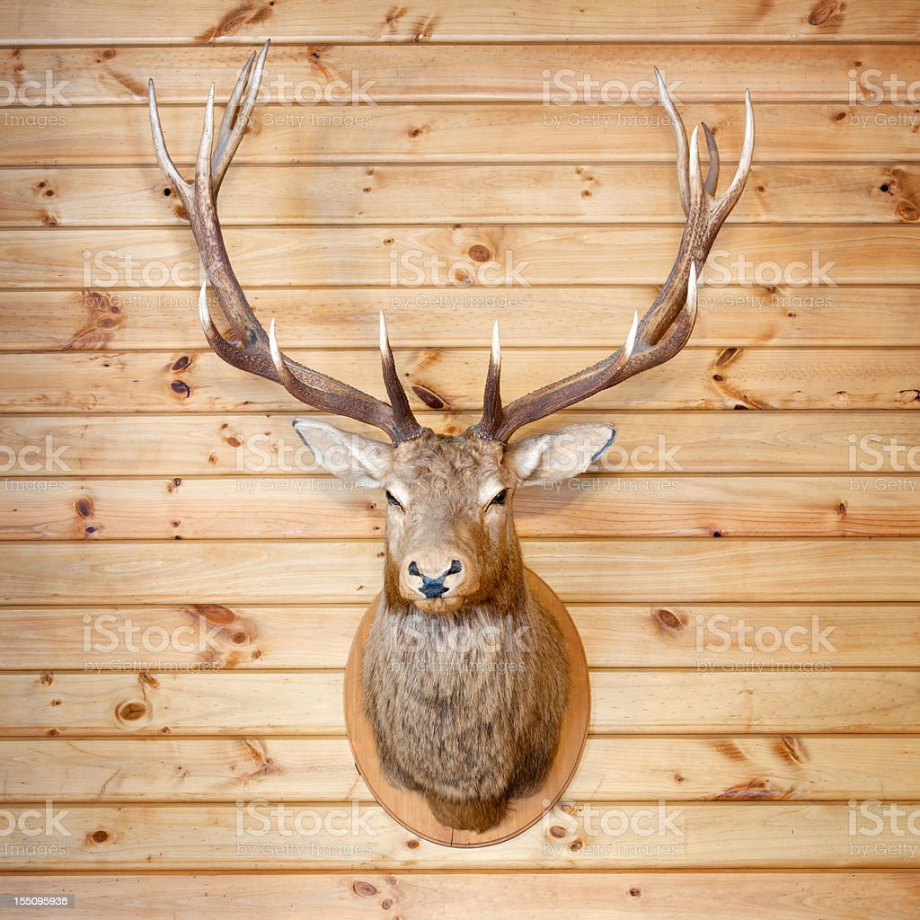 Deer Trophy (XXL) stock photo