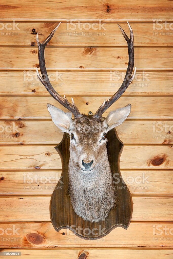Deer Trophy (XXXL) stock photo