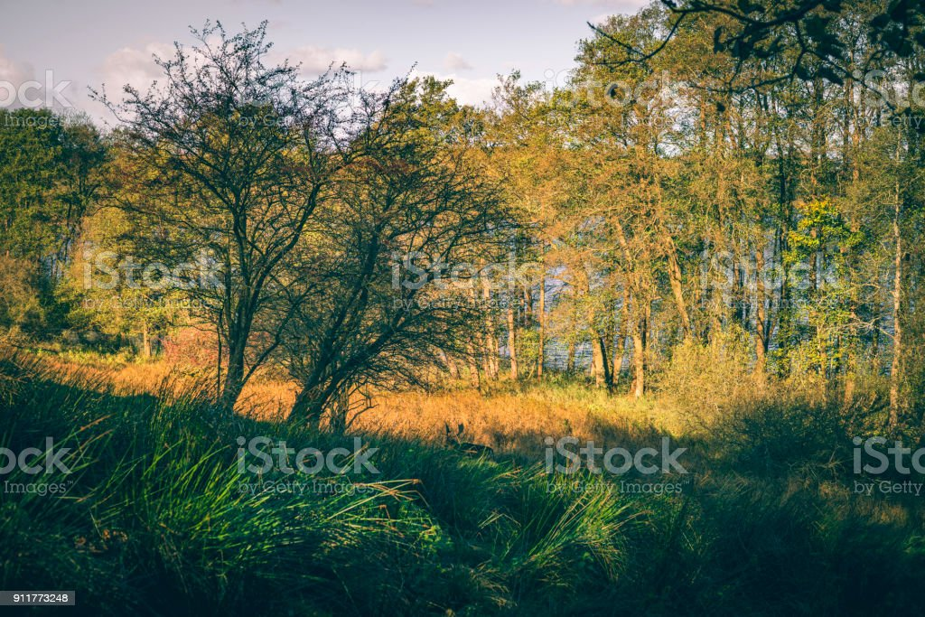 Deer walking in some tall grass in the autumn sun stock photo