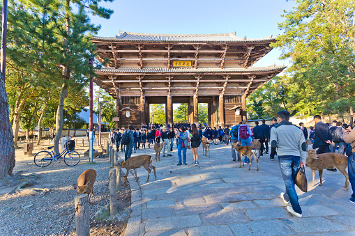 Deers and tourists at Todaiji temple in Nara, Japan