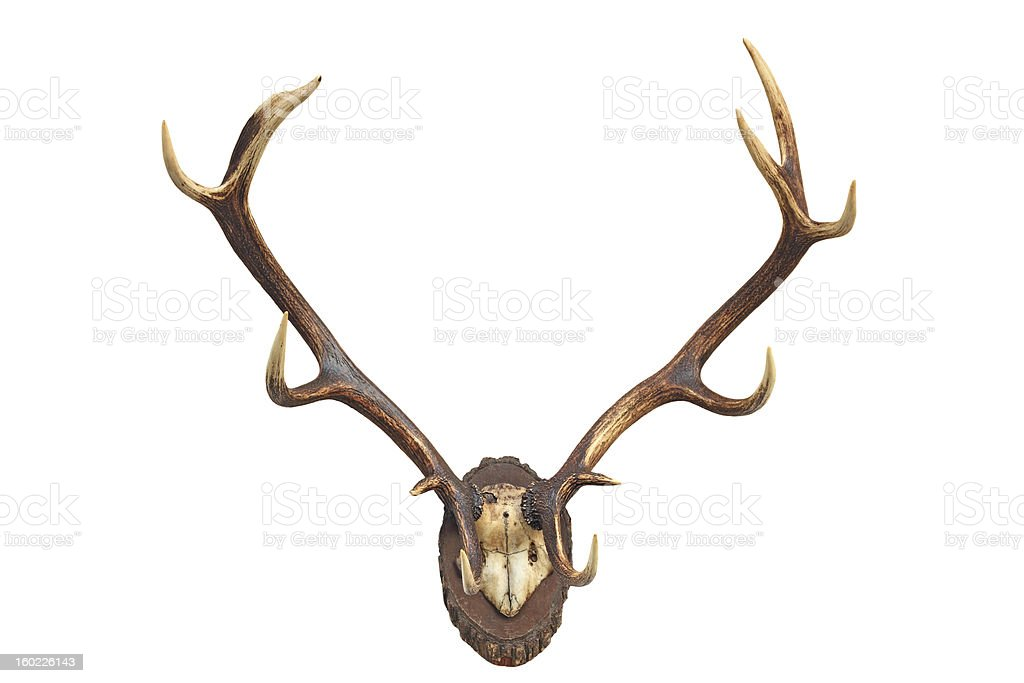 Deer's antler stock photo