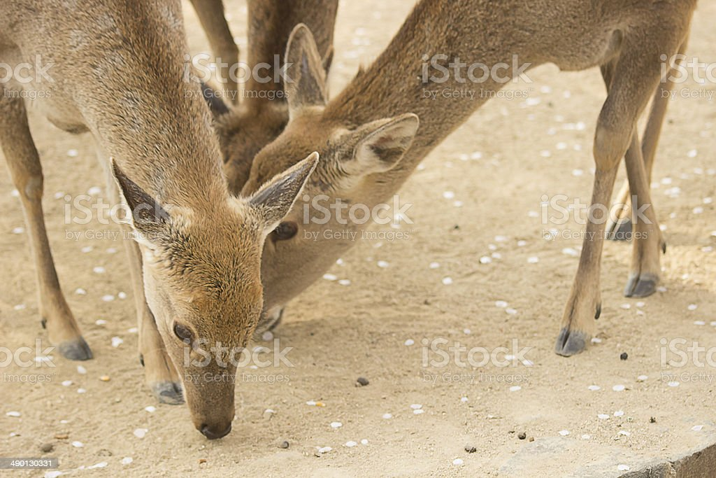 Deers at Seoul Forest royalty-free stock photo
