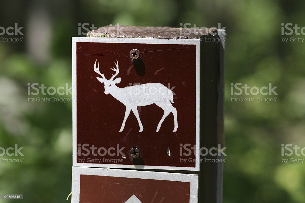 Deers in the park stock photo