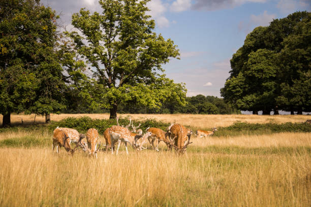Deers roaming free in the outdoors park stock photo