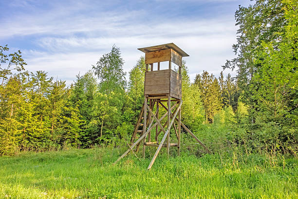 Deerstand in the forest Deerstand in the forest surrounded by trees, meadow in front high seat stock pictures, royalty-free photos & images