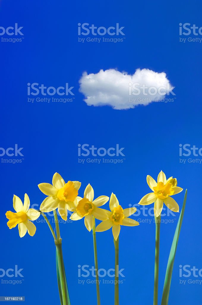 Definitely Springtime royalty-free stock photo