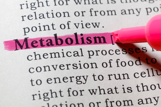 definition of metabolism stock photo