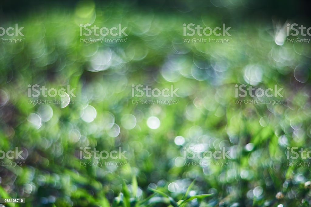 Defocus and bokeh green background royalty-free 스톡 사진