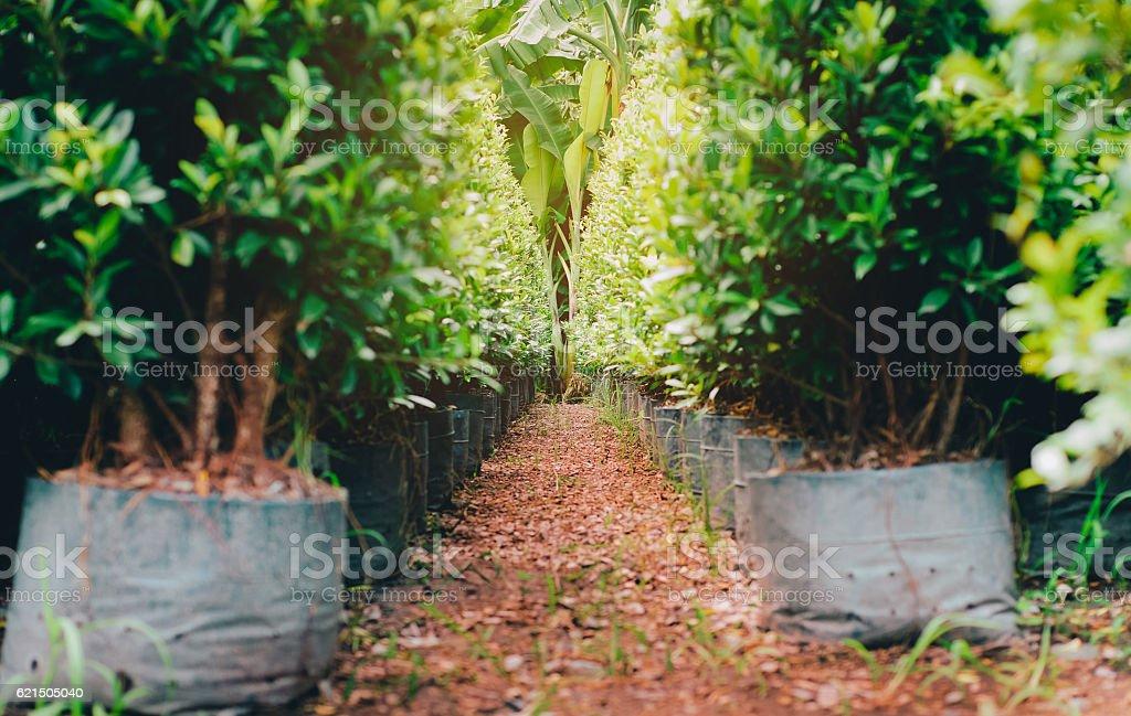 Defocus path in green garden background photo libre de droits