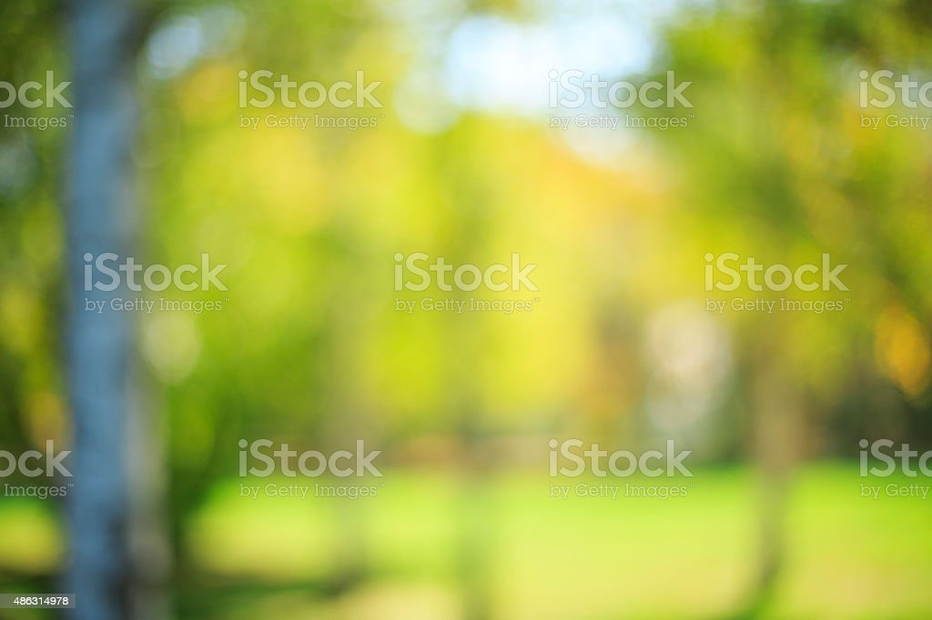 Fondo desenfocado de otoño hermosa naturaleza bosque de otoño y papel tapiz meadow - foto de stock