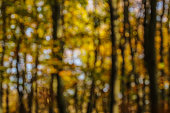 A defocused photo of autumn coloured leaves long dark tree trunks with orange and gold coloured leaves with bits of blue sky