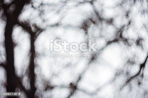 614958148 istock photo Defocused Background Of Trees Against Sky In Winter 1056414818