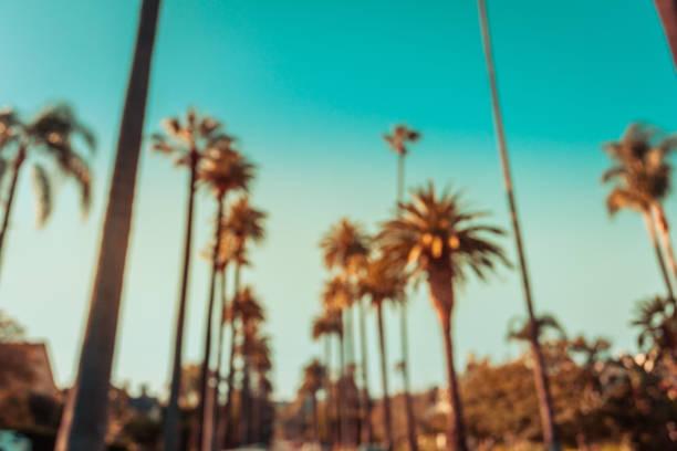 defokussierten beverly hills palmen in retro-ton - beverly hills stock-fotos und bilder