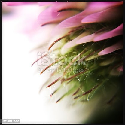 Defocused Macro Clover Flower.  iPhone