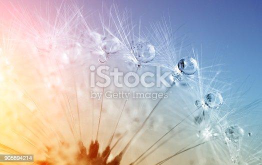 istock defocused drops on dandelion seed - abstract and minimalism 905894214