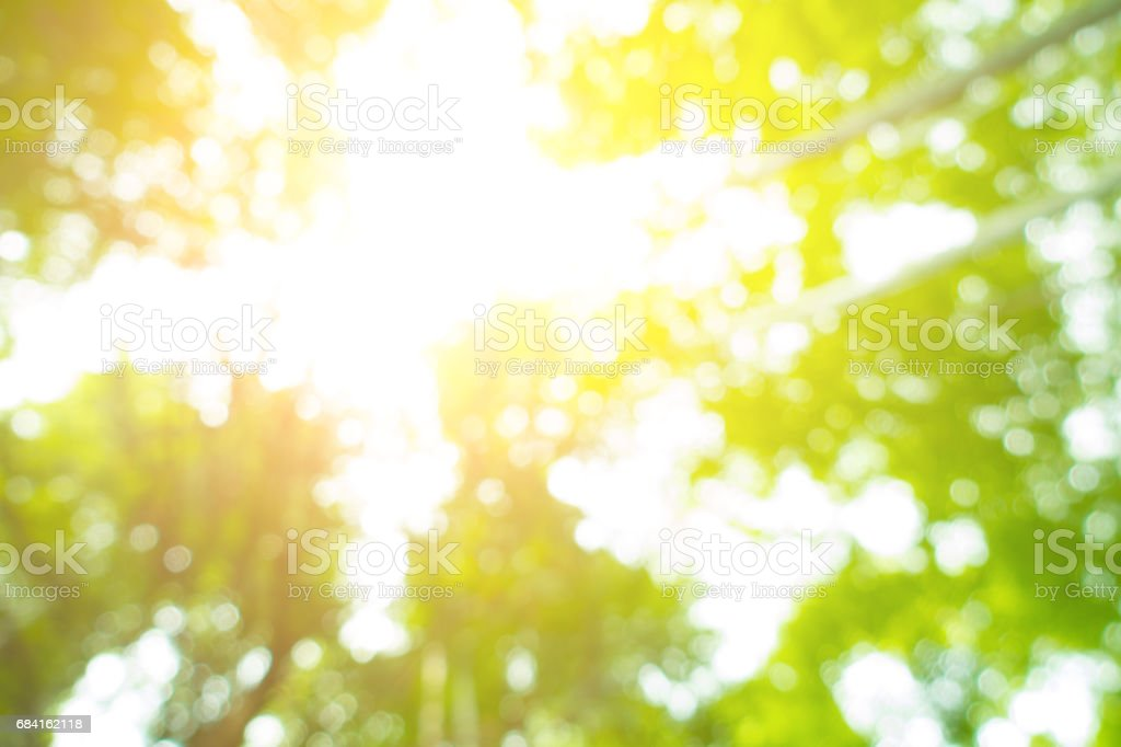 Defocused forest royalty-free stock photo