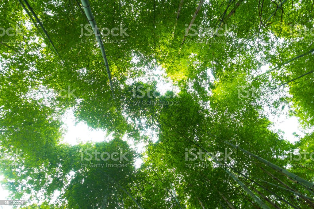 Defocused forest foto stock royalty-free
