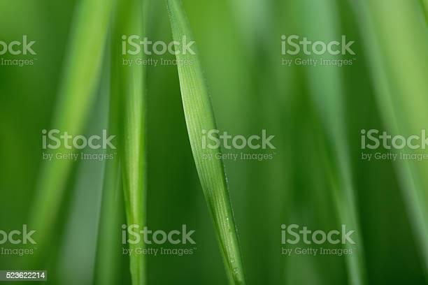 Photo of Defocused grass background