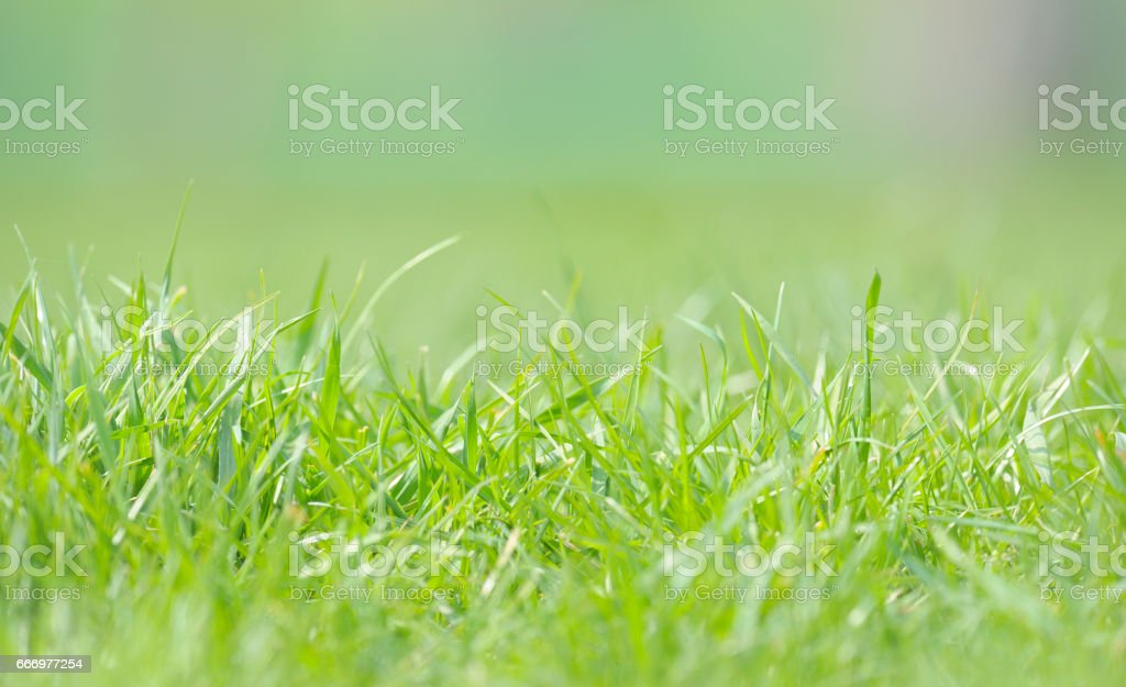 Defocused grass on field in spring time stock photo
