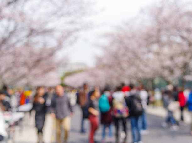 Defocused image of tourists in park during cherry blossoms in spring. stock photo