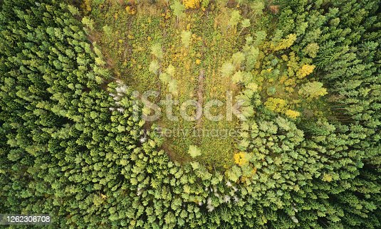 Deforest of green forest above top drone view. Making field fron cutting trees in forest