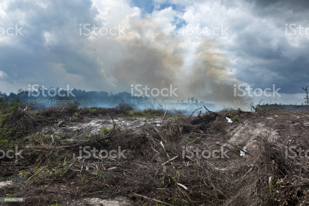 On the island of Kalimantan , vast parcels of lands that used to have...