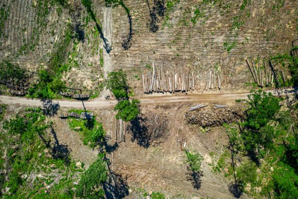 Entwaldung als Umweltzerstörung, Luftbild von Polen – Foto
