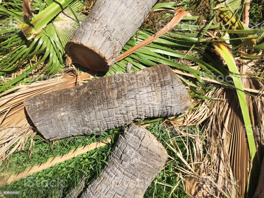 Deforestation Close-up stock photo