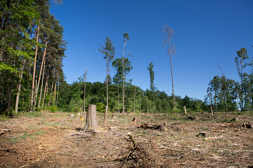 Deforestation, dead trees and forest dieback