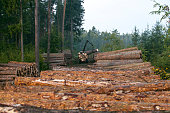 Deforestation effects on environment