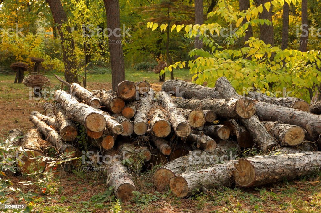 Deforestation, felled tree trunks in the forest, protecting the environment, the causes of global warming, climate change stock photo