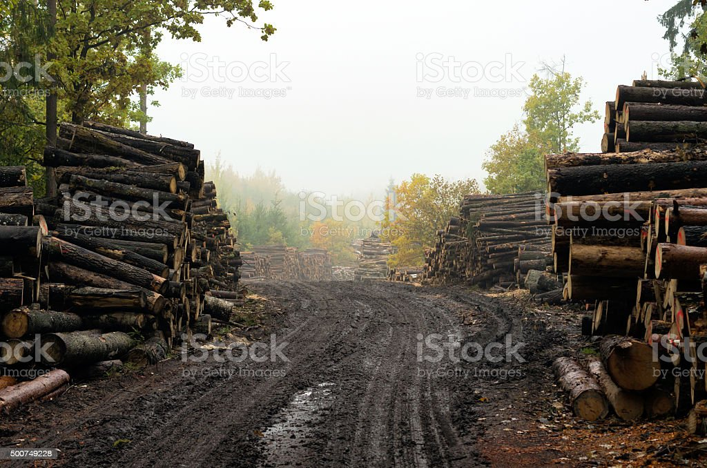 Deforestation: forest has been cut down by human development stock photo