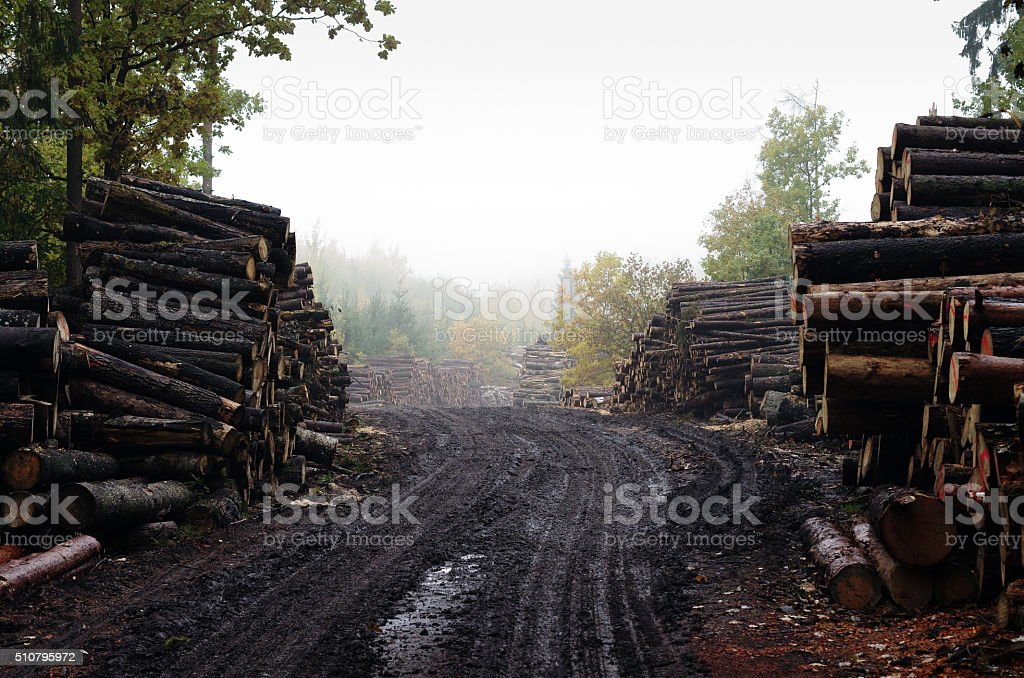 Deforestation: forest has been destroyed by human development stock photo