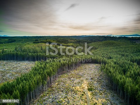 Swathes of ruined ground, cut out from thick evergreen forest of coastal Washington State. Despite the damage in the foreground, the trees stretch endlessly to the horizon, where the Pacific Ocean shines.