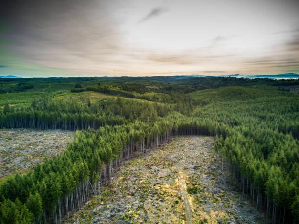 deforestation in managed woodland in washington, usa - industria forestale foto e immagini stock