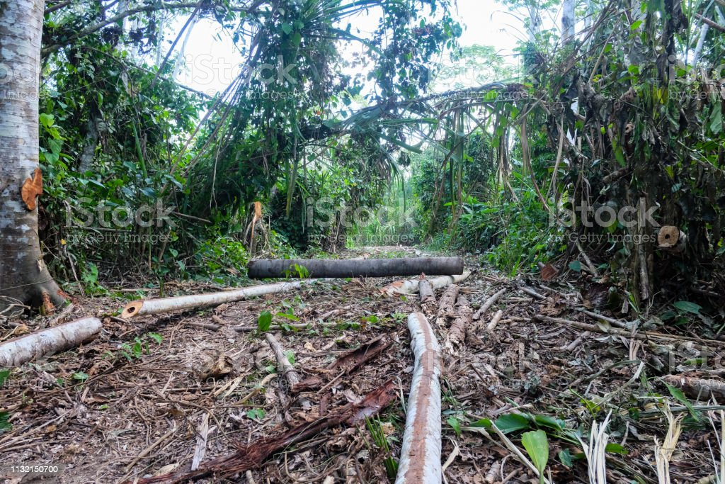 Deforestacion En El Bosque Lluvioso Sudamericano Foto De Stock Y Mas Banco De Imagenes De Accidentes Y Desastres Istock