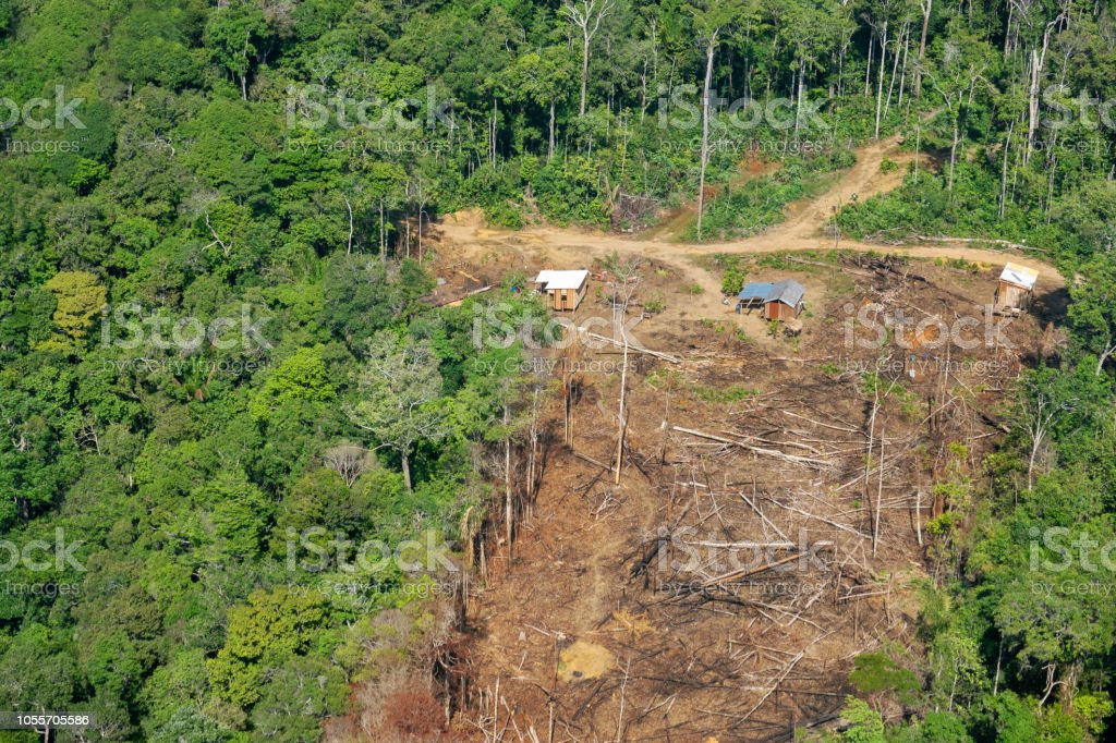 Deforestation in the Amazon Three small wood houses built in the middle of the jungle Abundance Stock Photo