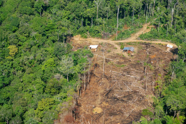 Deforestation in the Amazon Three small wood houses built in the middle of the jungle amazon region stock pictures, royalty-free photos & images