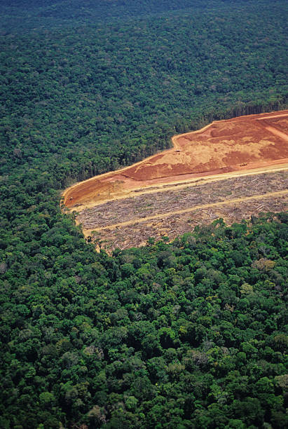Deforestation in the Amazon Photo made in slide film 35mm deforestation stock pictures, royalty-free photos & images