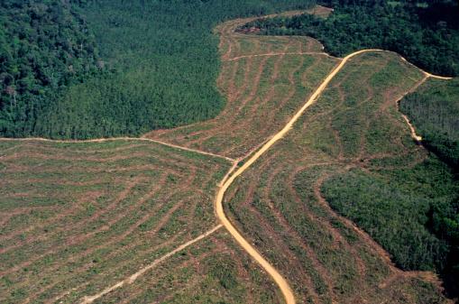 Disboscamento In Amazon - Fotografie stock e altre immagini di Agricoltura