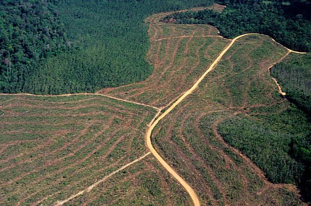 deforestación en el amazonas - deforestacion fotografías e imágenes de stock