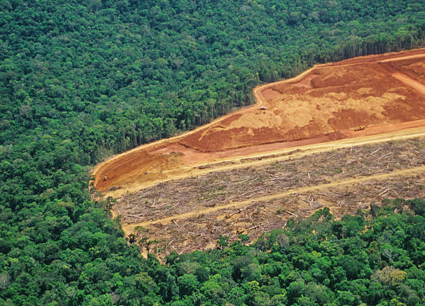 Deforestation in the Amazon stock photo