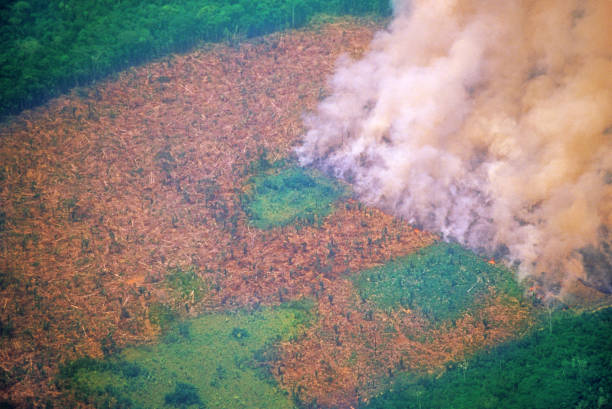 Deforestation in the Amazon Typical scene in the Amazon amazon region stock pictures, royalty-free photos & images